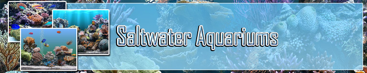 How To Safely Change The Water In Your Saltwater Aquarium at Aquariums